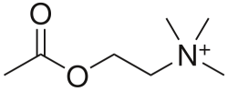 Acetylcholine (ACh)