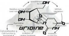 Uridine as a Nootropic: the Cofactor that comes from Beer (+Rant)